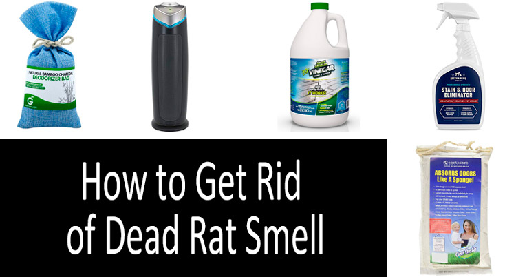 How to Get Rid of Dead Rat Smell: photo