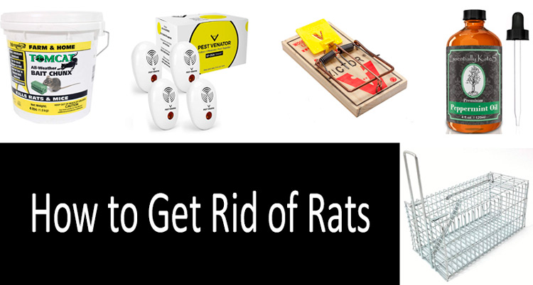 how to get rid of rats: photo